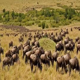 Otto Safari Guide Tanzania
