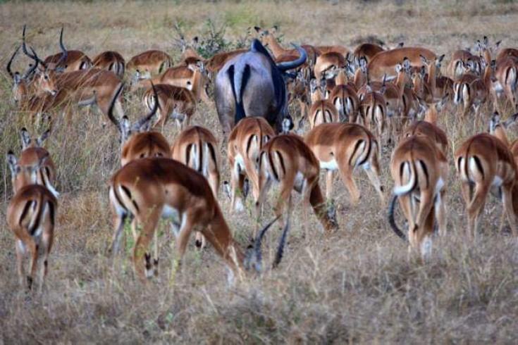 wild animals in mikumi national park